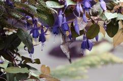 Colibri in flight near the flower Stock Photo
