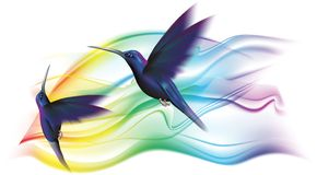 Colibri. In flight over an iridescent glow Royalty Free Stock Images
