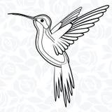 Colibri or Hummingbirds for logo, icon, t-shirt, mascot, poster vector illustration   Stock Photos