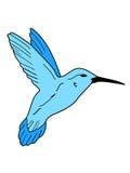 Colibri na flor Foto de Stock