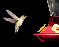 Colibri no alimentador isolado no preto fotografia de stock