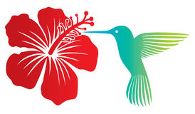 Colibri och blomma Arkivbilder