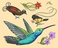 Colibri pequeno, pássaro de paraíso Narciso amarelo e orquídea com folhas e botões Flores do casamento no jardim da mola exotic ilustração royalty free