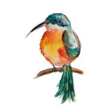 Colibri Rubis-throated nord-américain illustration stock