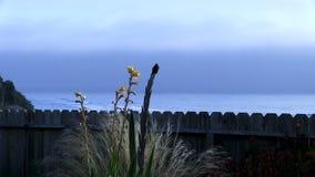 Colibri se reposant sur l'usine avec l'océan et le ciel obscurci à l'arrière-plan banque de vidéos