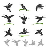 Colibri set. Vector Stock Image