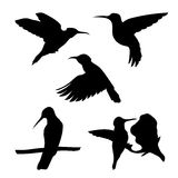 Colibri set vector. Colibri set of silhouettes vector vector illustration