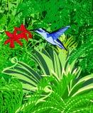 Colibri: vector. Blue colibri on a rain forest baackground: vector vector illustration