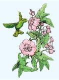 Colibri y flores stock de ilustración
