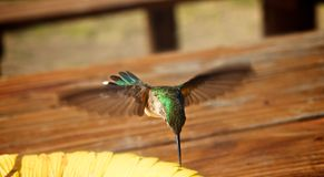 Colibris en vol Photo stock