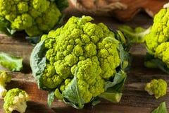 Coliflor verde orgánica cruda del bróculi Fotografía de archivo libre de regalías
