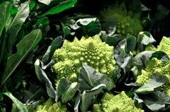Coliflor, verdura, comida, ingrediente, orgánico Imagen de archivo