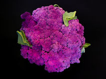 Coliflor violeta imagenes de archivo