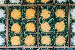 Coliflores en tienda en el mercado Imagen de archivo libre de regalías