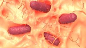 Coliform microorganism on human skin macro shot, 3d illustratio. N Stock Photo
