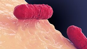Coliform microorganism macro shot for medicine,. 3d illustration Stock Images