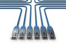 Coligação, cabos da rede, cabos de LAN Imagem de Stock Royalty Free