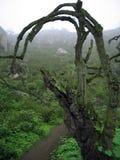 colina Foto de archivo libre de regalías