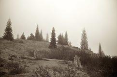 Colina alpina de niebla Fotos de archivo libres de regalías