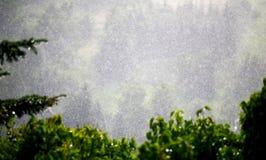Colina borrosa en lluvia con las hojas del pino y de la uva Imagen de archivo libre de regalías