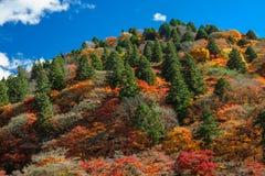 Colina coloreada multi del otoño Fotos de archivo