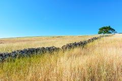 Colina de California del comienzo del verano debajo del cielo azul Fotografía de archivo libre de regalías