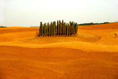 Colina de Cypress Fotografía de archivo