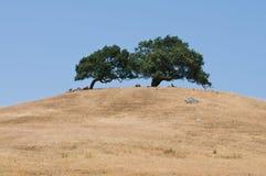 Colina de dos árboles Fotos de archivo libres de regalías