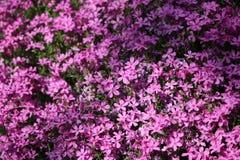 Colina de flores Foto de archivo