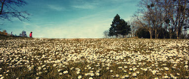 Colina de la flor Imagen de archivo libre de regalías