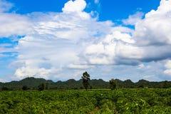 Colina de la granja de la planta de la montaña Imagen de archivo