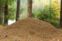 Colina de la hormiga Imagen de archivo