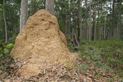 Colina de las termitas Foto de archivo libre de regalías