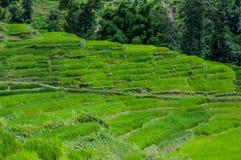 Colina del arroz de Nepal Foto de archivo libre de regalías