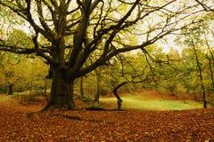 Colina del bajío, bosque de la caza de Cannock en otoño Fotografía de archivo libre de regalías