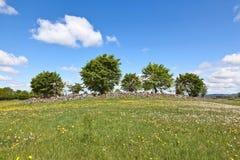 Colina del árbol Imagen de archivo