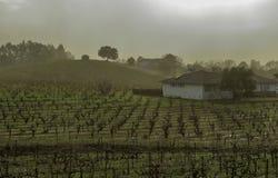Colina del viñedo con filas de las vides de uva, de las casas, y de los árboles imagen de archivo