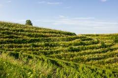 Colina en Croacia septentrional foto de archivo