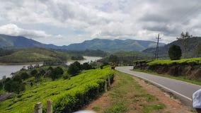 Colina en Munnar, Kerala, la India fotografía de archivo libre de regalías