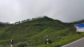 Colina en Munnar, Kerala, la India fotos de archivo