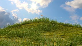 Colina herbosa con la manzanilla y la mariquita ilustración del vector