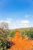 Colina roja de la termita Fotografía de archivo
