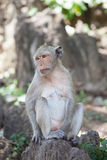 Colina tailandesa del mono Imagenes de archivo