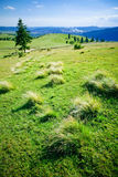 Colina verde Foto de archivo