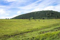 Colina verde Fotos de archivo