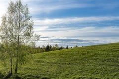 Colina verde, abedul y cielo nublado Fotos de archivo