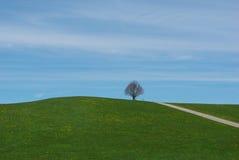 Colina y árbol cerca de Steingaden, Alemania Fotografía de archivo libre de regalías