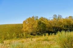 colina y árboles amarillos Fotos de archivo