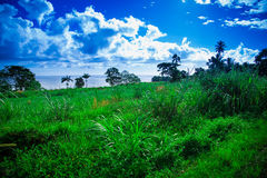 Colina y océano herbosos en el fondo, Hilo Hawaii Fotografía de archivo