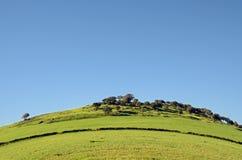 Colina y prados verdes Imagen de archivo